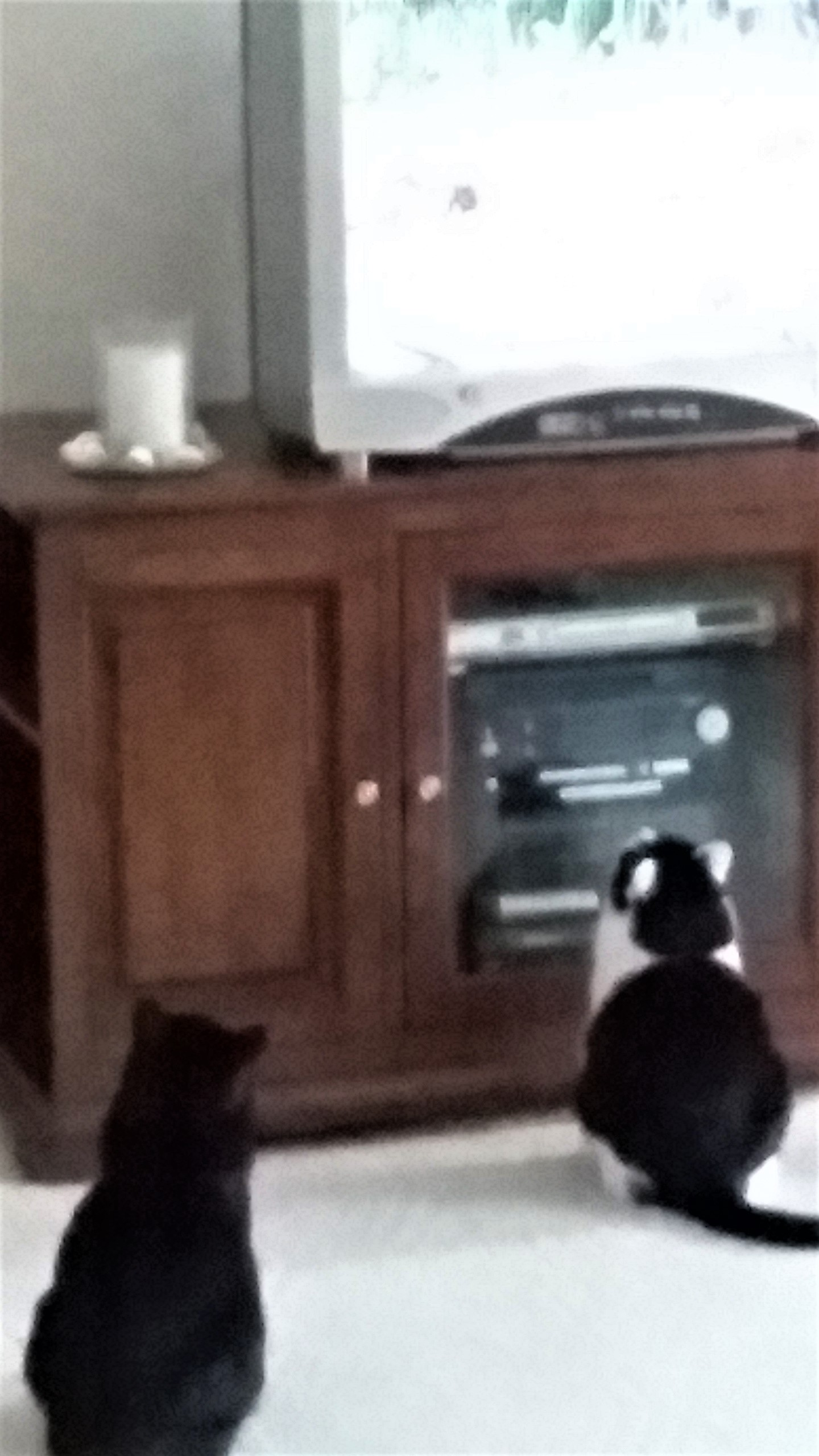 Holly and Kelsie watching Bird TV April 2019.jpeg