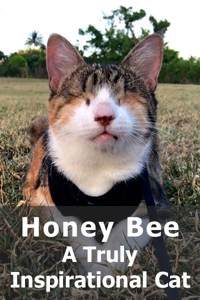 The story of Honey Bee - the blind cat that travels the world - will truly inspire you
