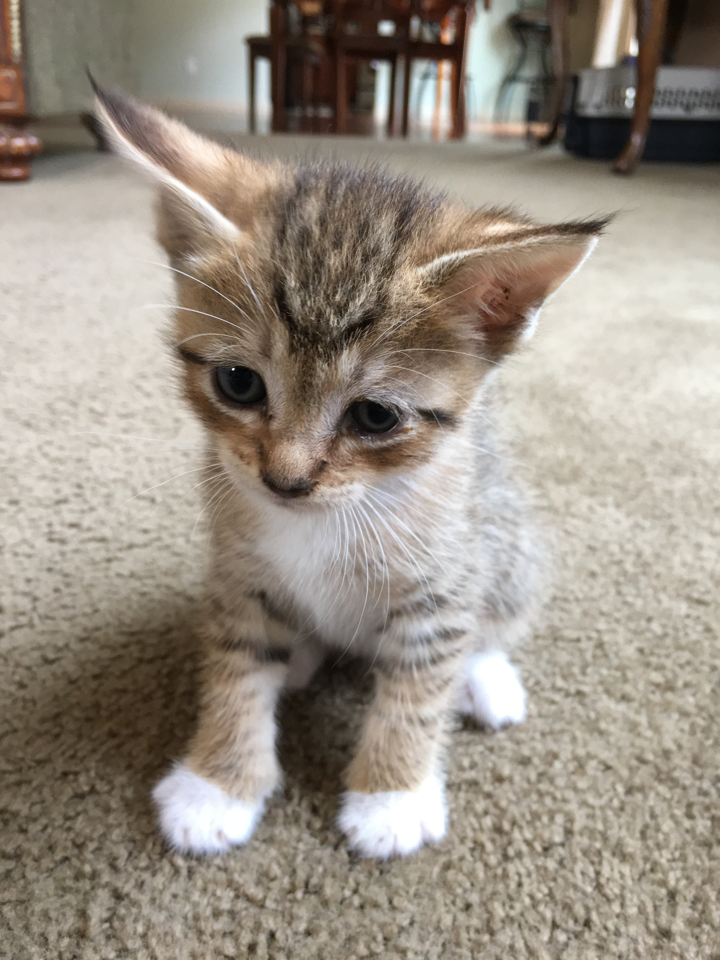 What Breed Does My Kitty Look Like