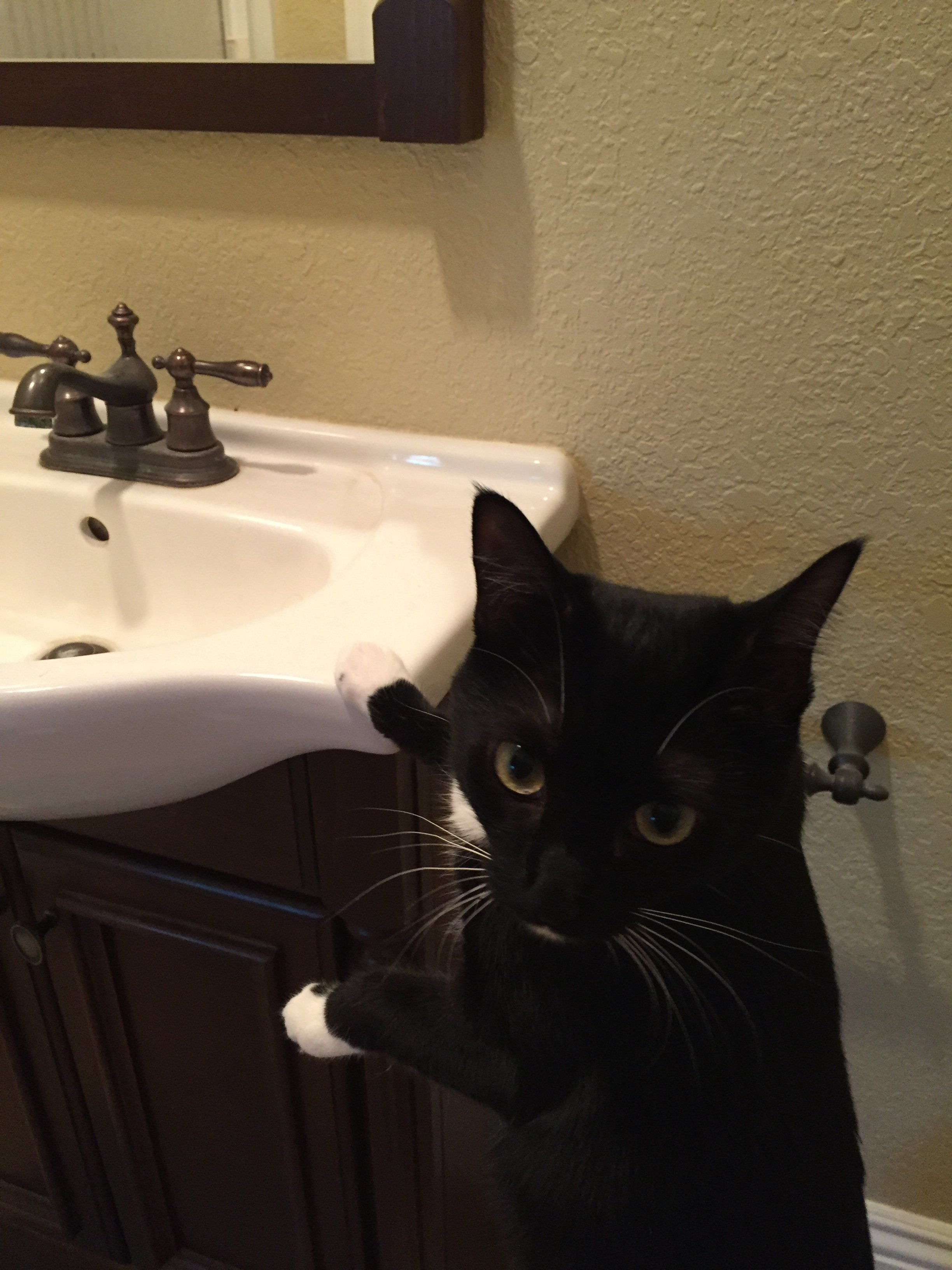 Cat Obsessed With Bathroom Sink | TheCatSite