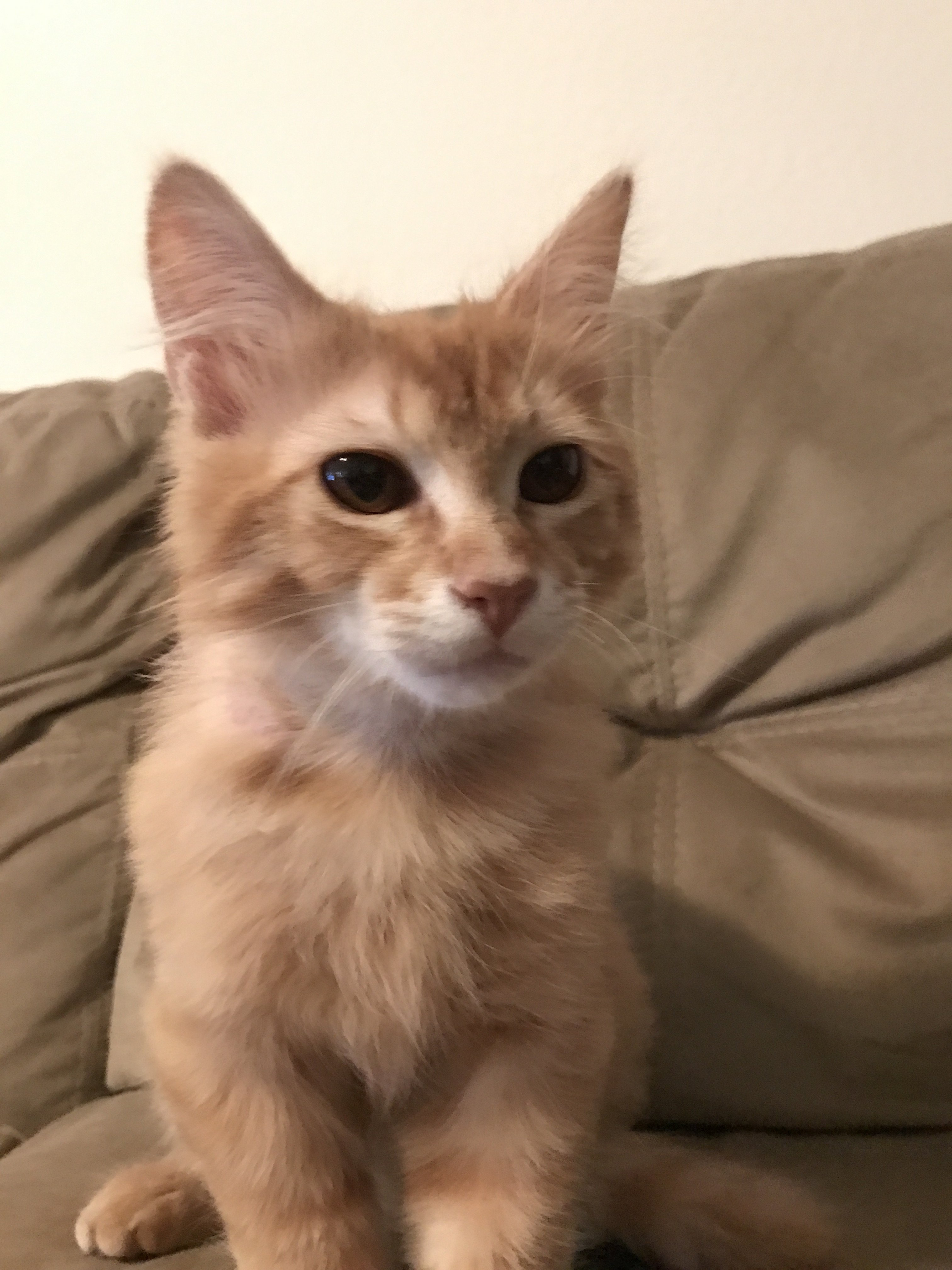 Help With Identifying Cat s Breed