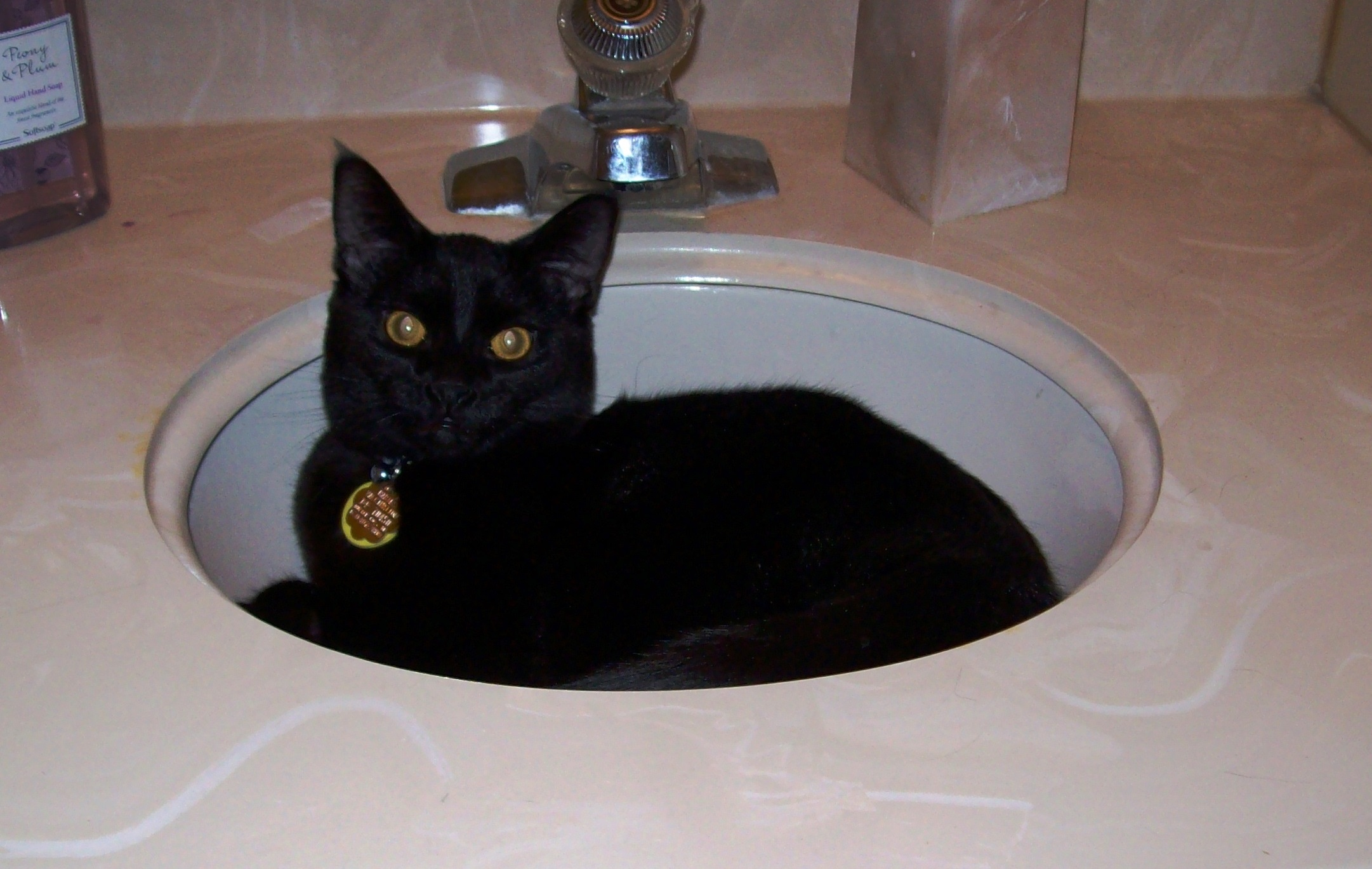 In the Sink 2.jpg