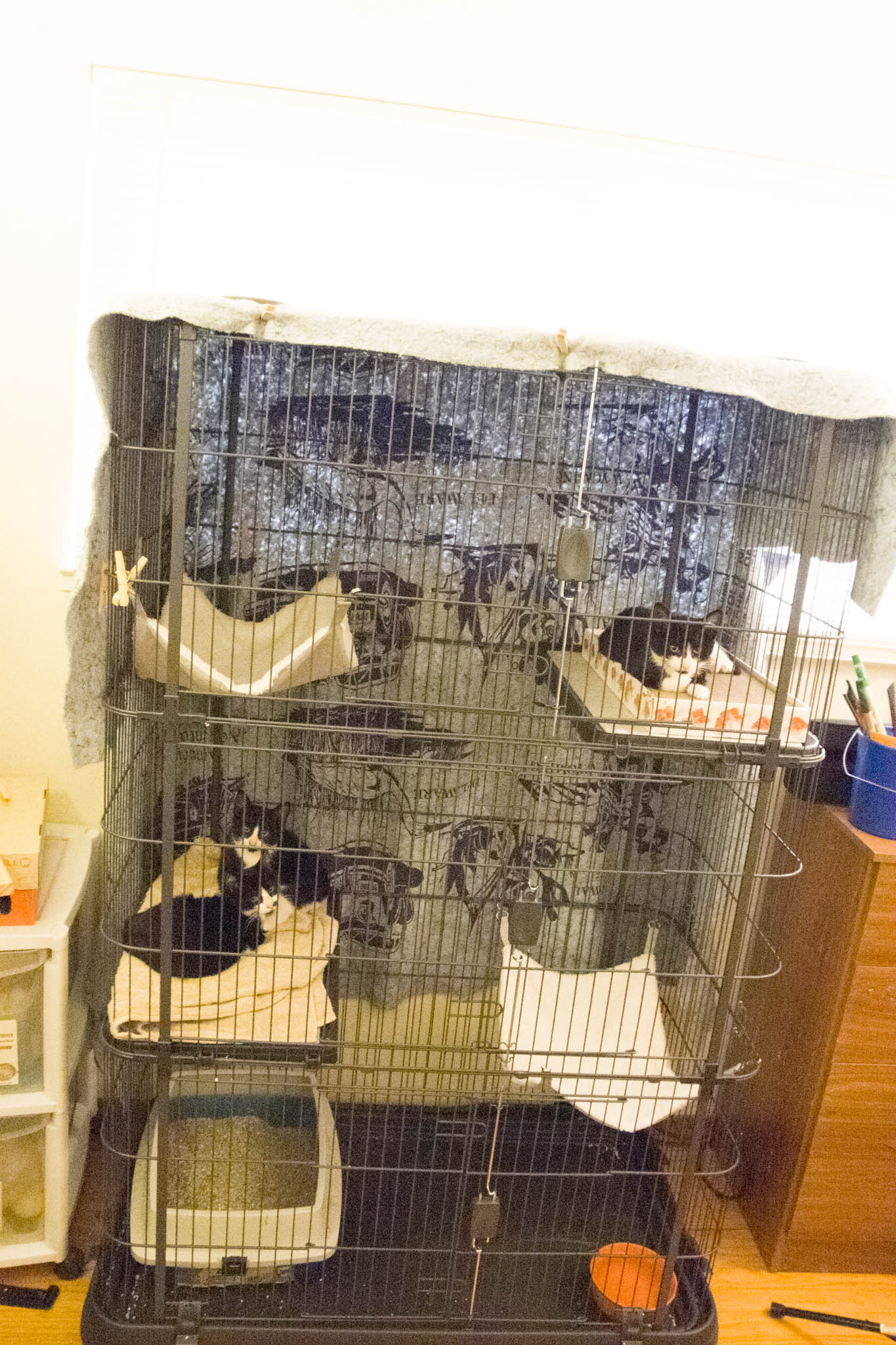 itty-bitty-kitty-condo2.jpg