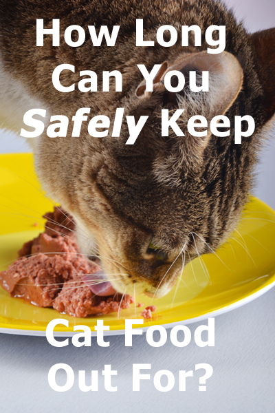 How Long Can You Safely Keep Cat Food Out For?