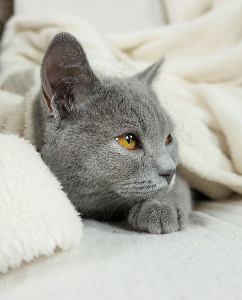 9 Tips that will help your kitten adapt to a new home: Bring a familiar blanket to add familiar scents to the new environment