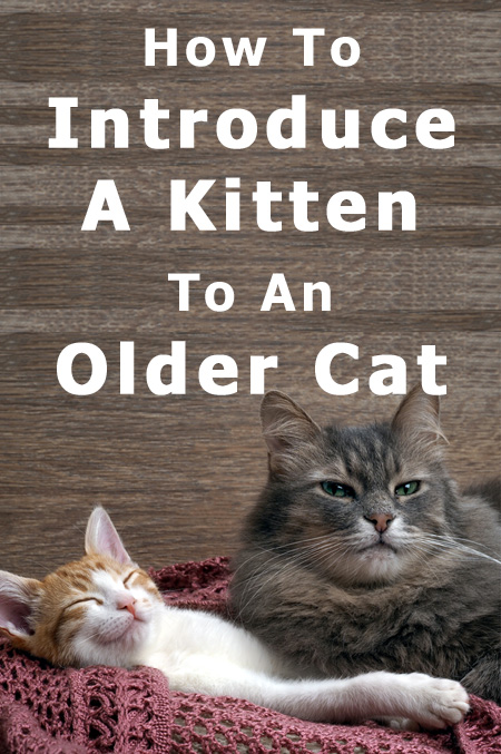 How To Introduce A Kitten To An Older Cat