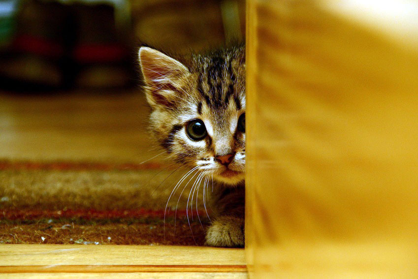 Kitten hiding close to the floor