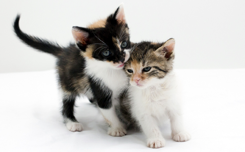 How much time does it take to care for a kitten?