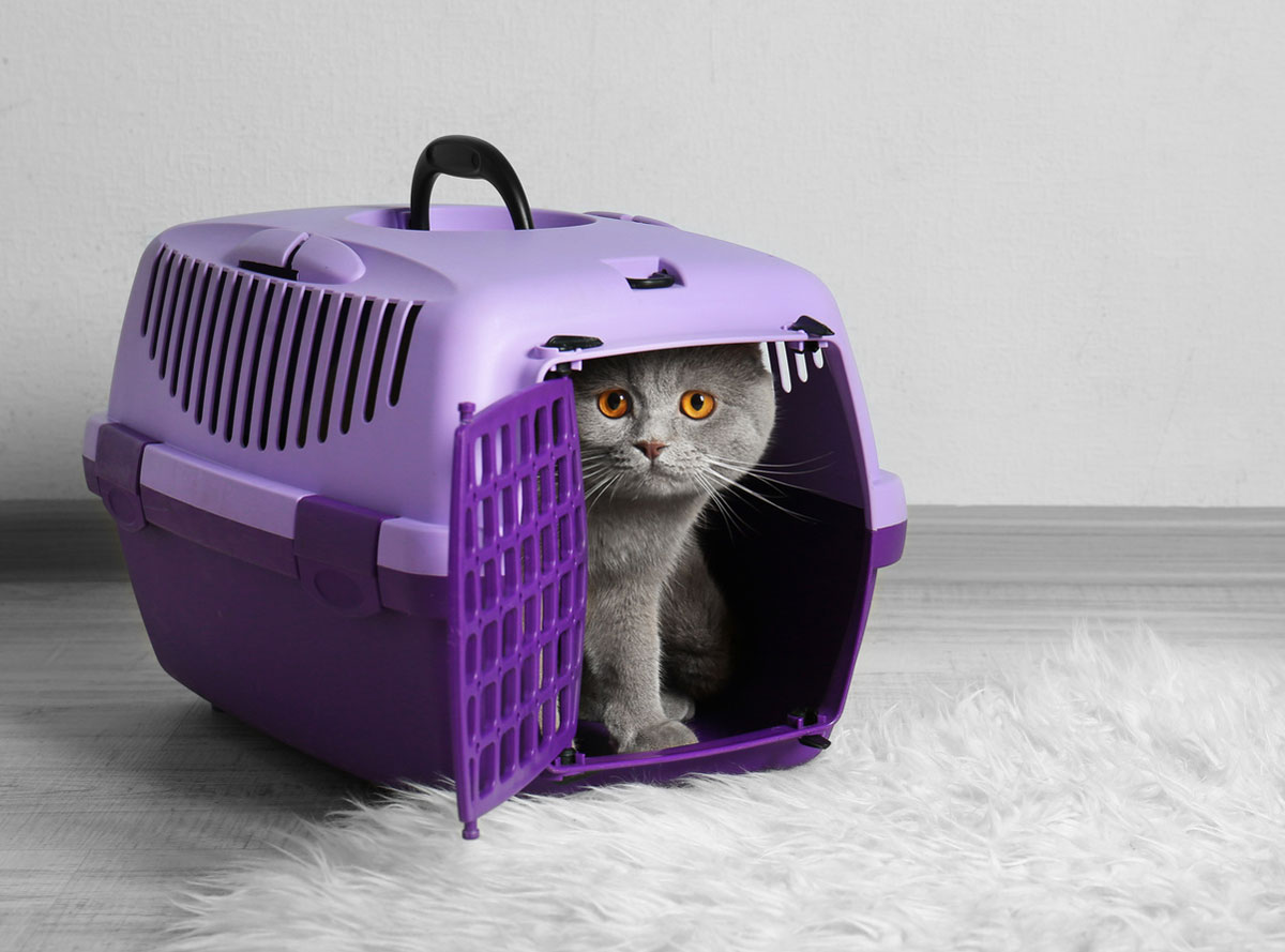 Help Your Kitten Adapt To A New Home: The Carrier