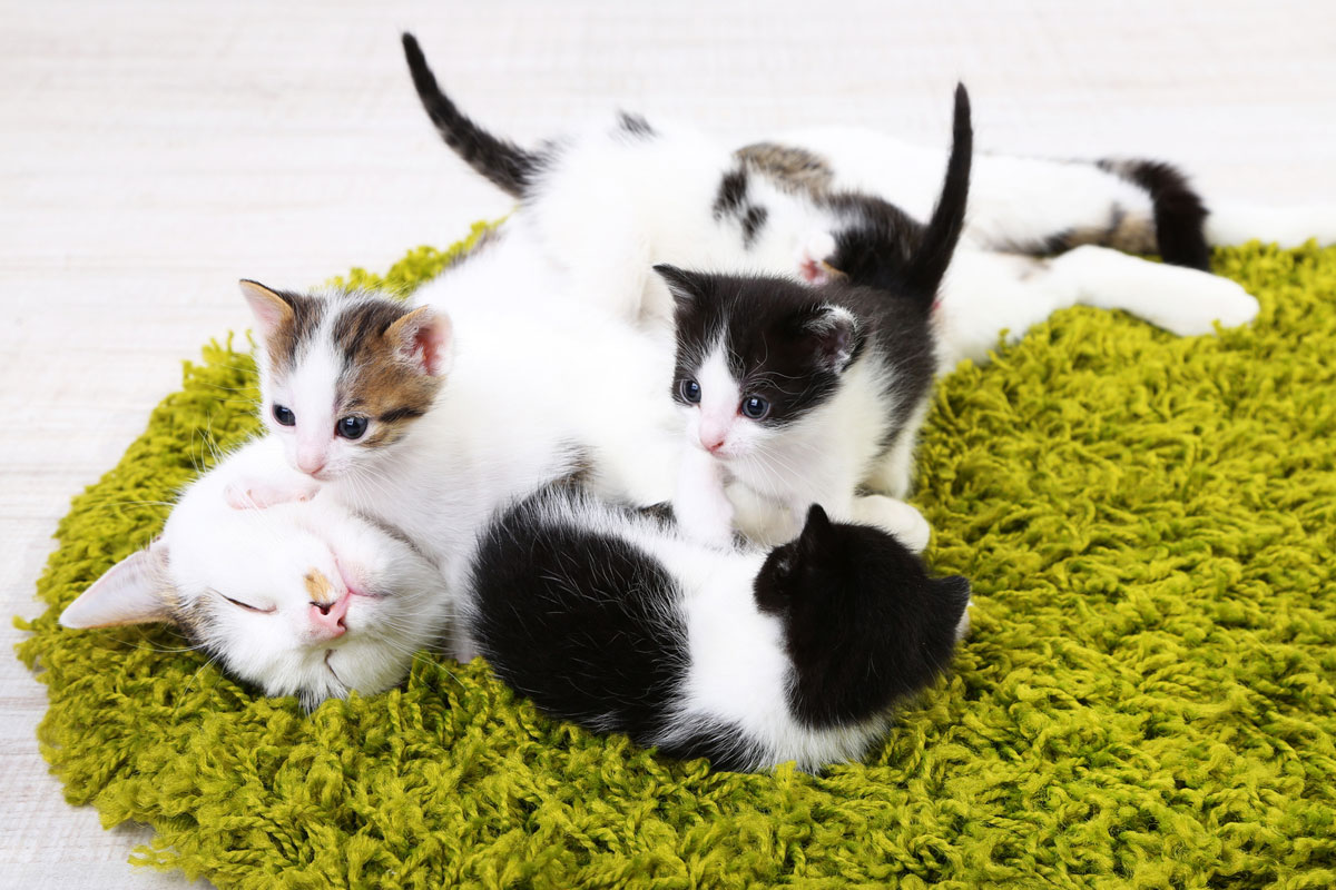 Mother cat with kittens - are they ready to be litter box trained?