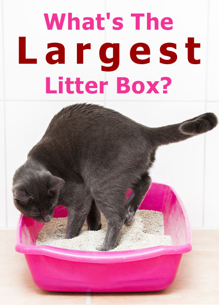 What's The Largest Cat Litter Box (and Why Your Cat Needs It)