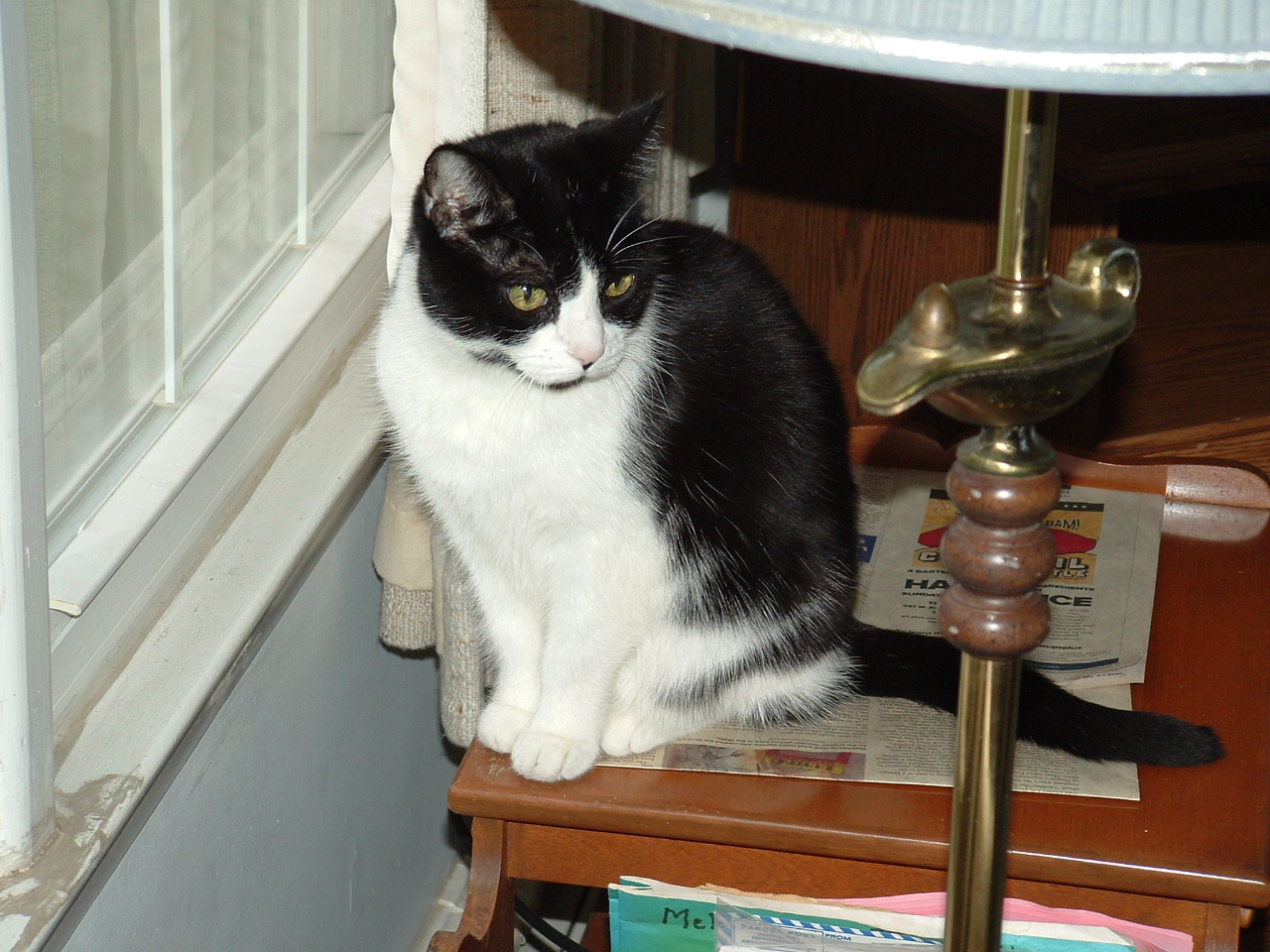 lolly 017. & Do Not Give Your Cat Pepcid Ac.....do Not | TheCatSite