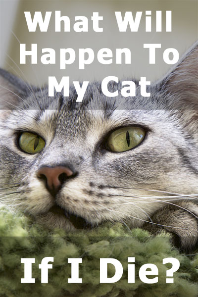 What Will Happen to My Cat if I Die? A concise step-by-step guide for making sure your cat is well taken care of in case you pass away