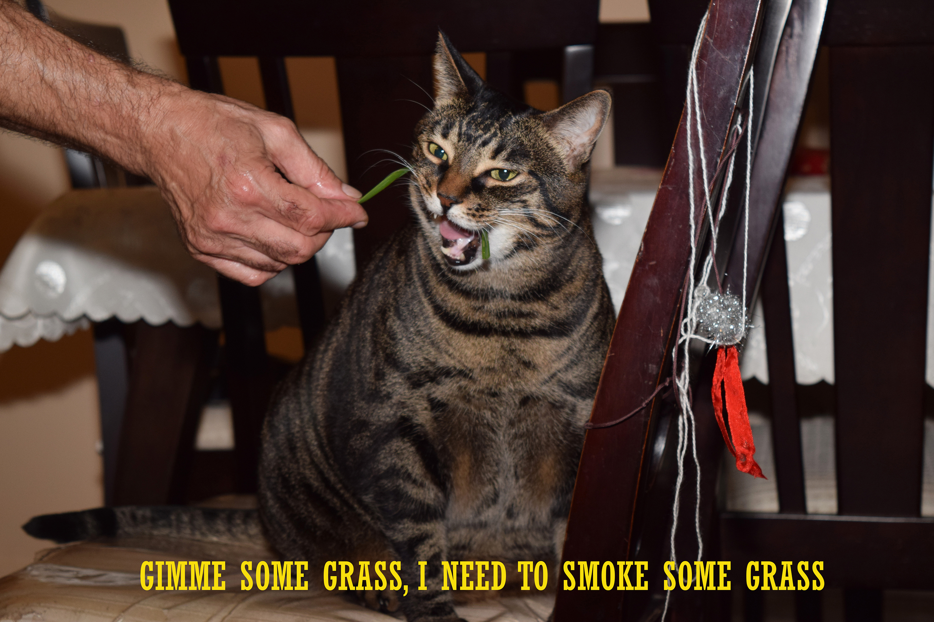 NEED TO SMOKE SOME GRASS jpeg resized for cats site.jpg
