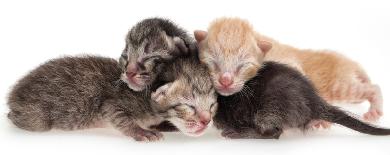 How much time does it take to care for newborn kittens?