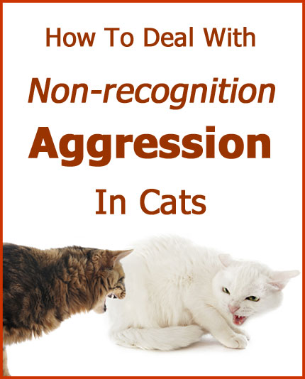 How To Deal With Non-recognition Aggression In Cats