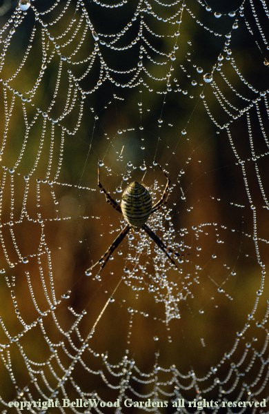 Patterns of Nature_spiderweb with dewdrops.jpg