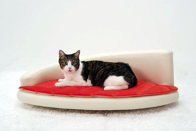 Petiture Sofa For Cats