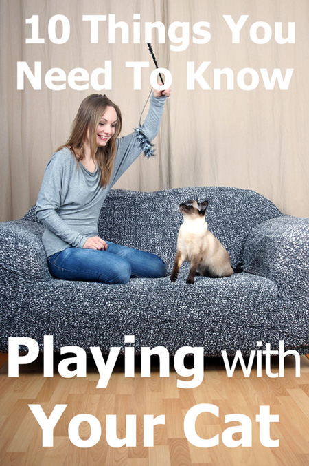 Playing With Your Cat: 10 Things You Need To Know