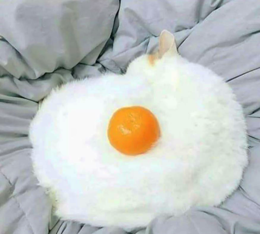 poached egg kitty.png