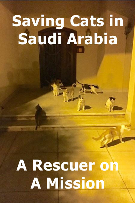 Rescuing Cats In Saudi Arabia - Lauren's Story