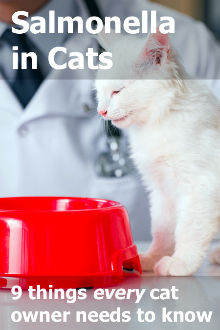 salmonella-in-cats-p.jpg
