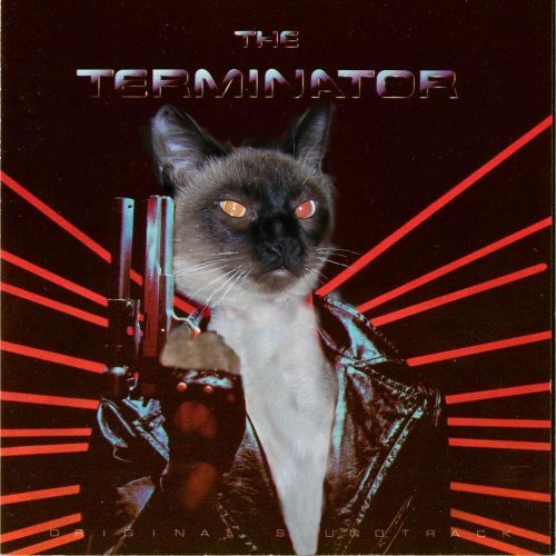 Schrodinger The Terminator.png