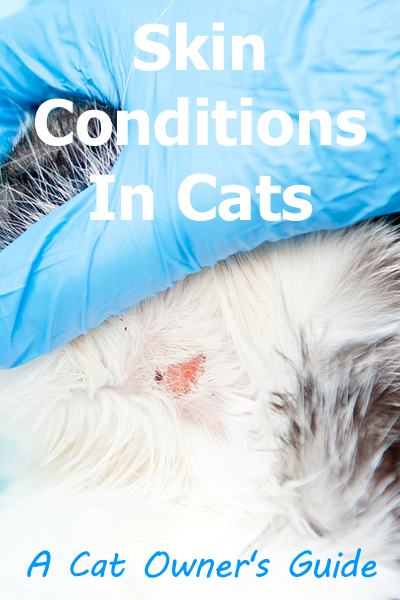 skin-conditions-cats.jpg