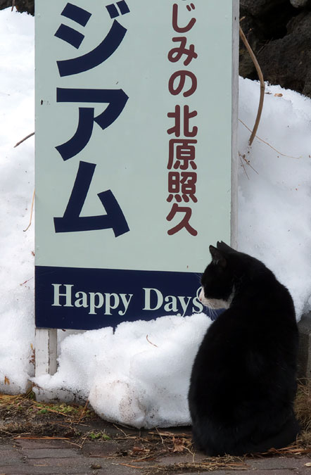 Caring for Stray And Feral Cats in Japan