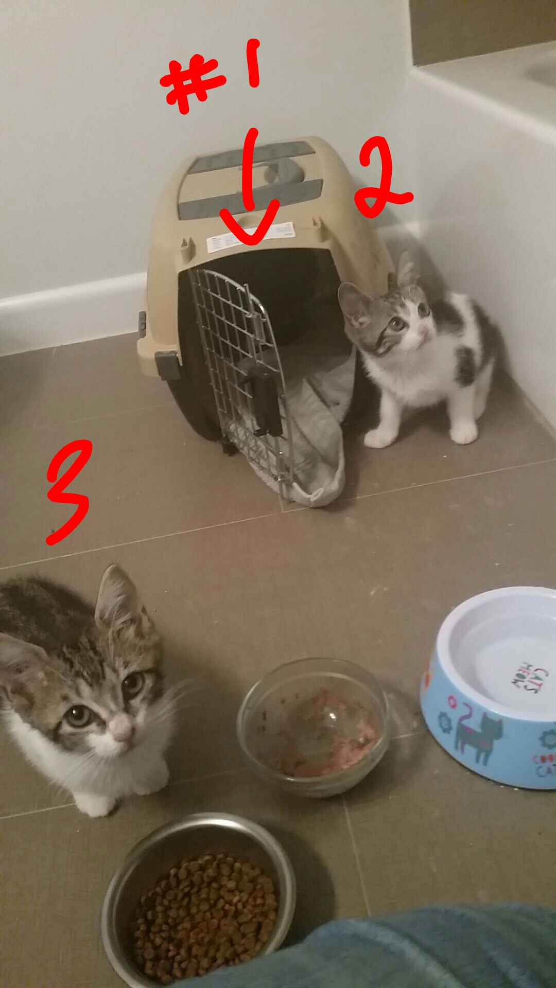 socializing feral kittens is feeling like there is no hope is
