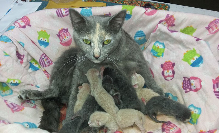 The surprise pregnancy that ended in caring for 9 kittens