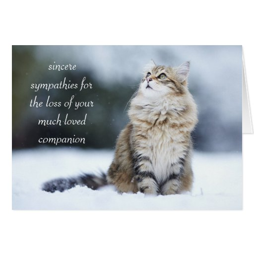 sympathy_card_for_the_loss_of_a_cat-rb1a31673662a44e894fea662d8ebe838_xvua8_8byvr_512.jpg