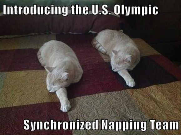 syncronized napping.jpg