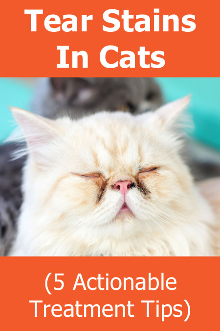 Tear Stains In Cats (including 5 Actionable Treatment Tips)
