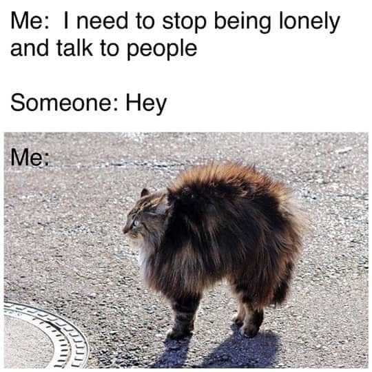 to-stop-being-lonely-and-talk-to-people-someone-hey-me-cat-looking-alert-with-its-fur-standing...jpg