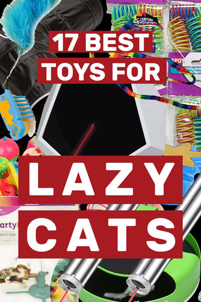 17 Best Toys For Lazy Cats - How to get Kitty to play