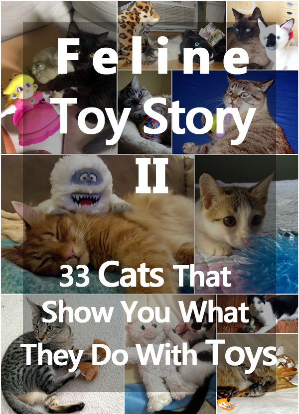 Feline Toy Story II: 33 Cats That Show You What They Do With Toys