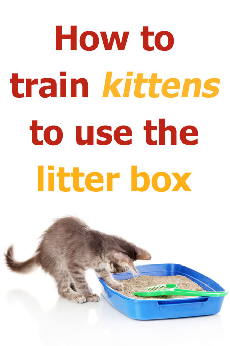 How to train kittens to use the litter box