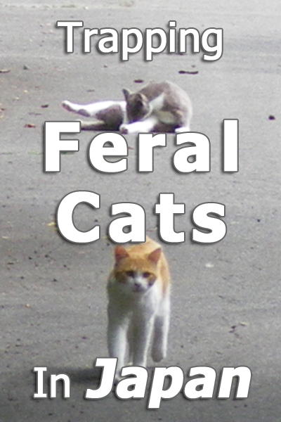Trapping Feral Cats In Japan - A Rescuer's Story