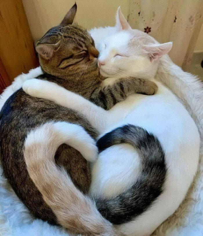 two-cats-better-than-one-5-60a76c5ce2159__700.jpg
