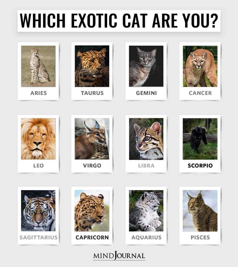 Which-Exotic-Cat-Are-You-Based-On-Your-Zodiac-Sign.jpg