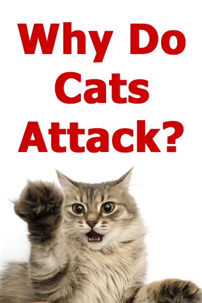 Why Do Cats Attack? The reasons for feline aggression explained