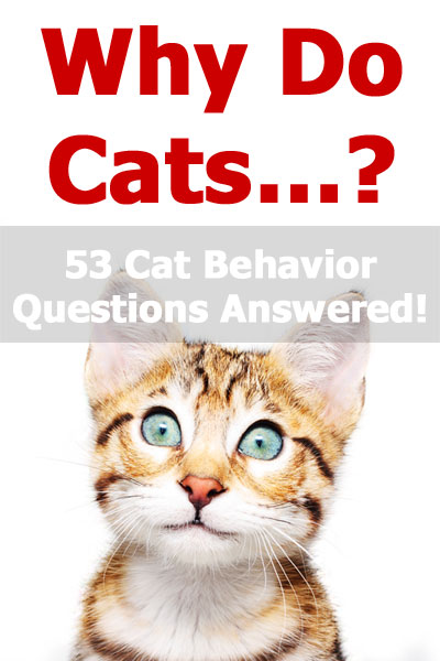 Why do cats? The ultimate guide to feline behavior