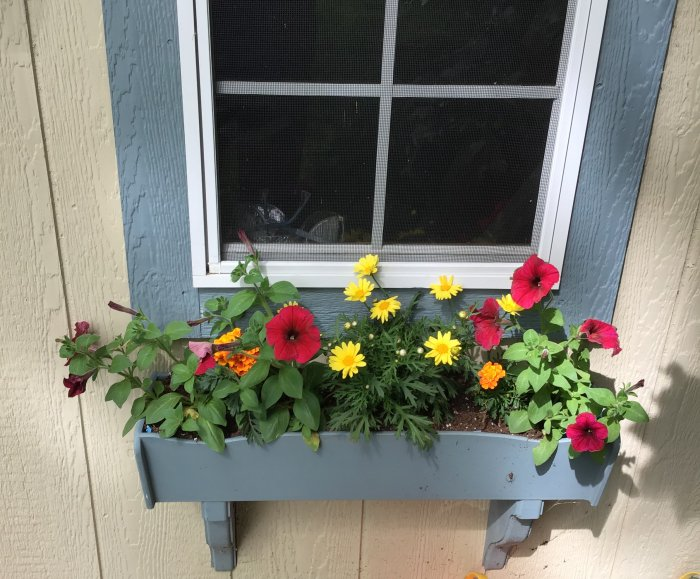 WindowboxES.jpg