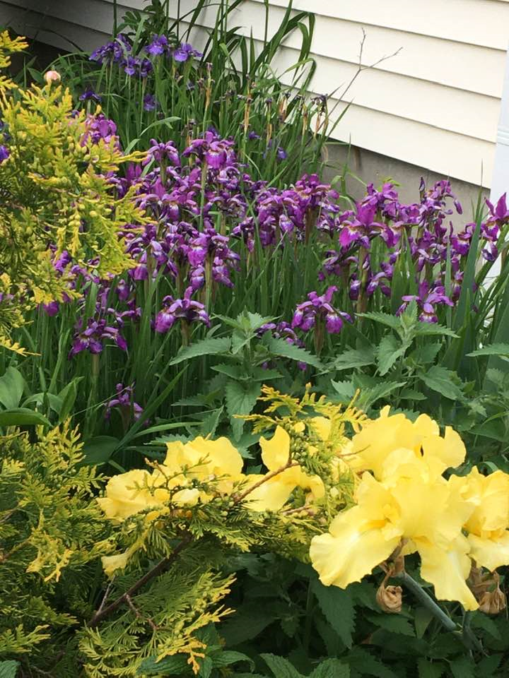yellows and purple.png