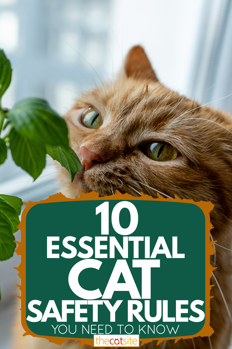 A cute ginger cat sniffing fresh home grown basil, 10 Essential Cat Safety Rules You Need To Know