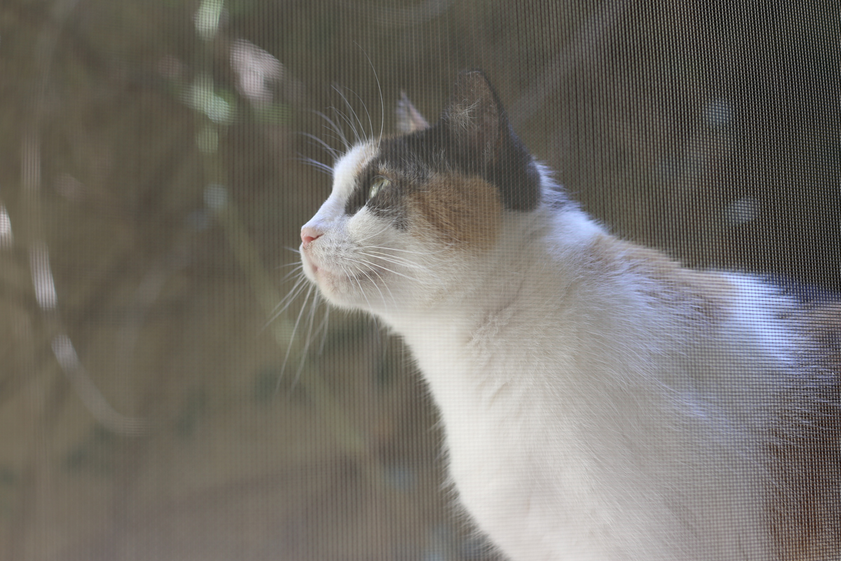 A cat sitting behind a window screen and staring outside