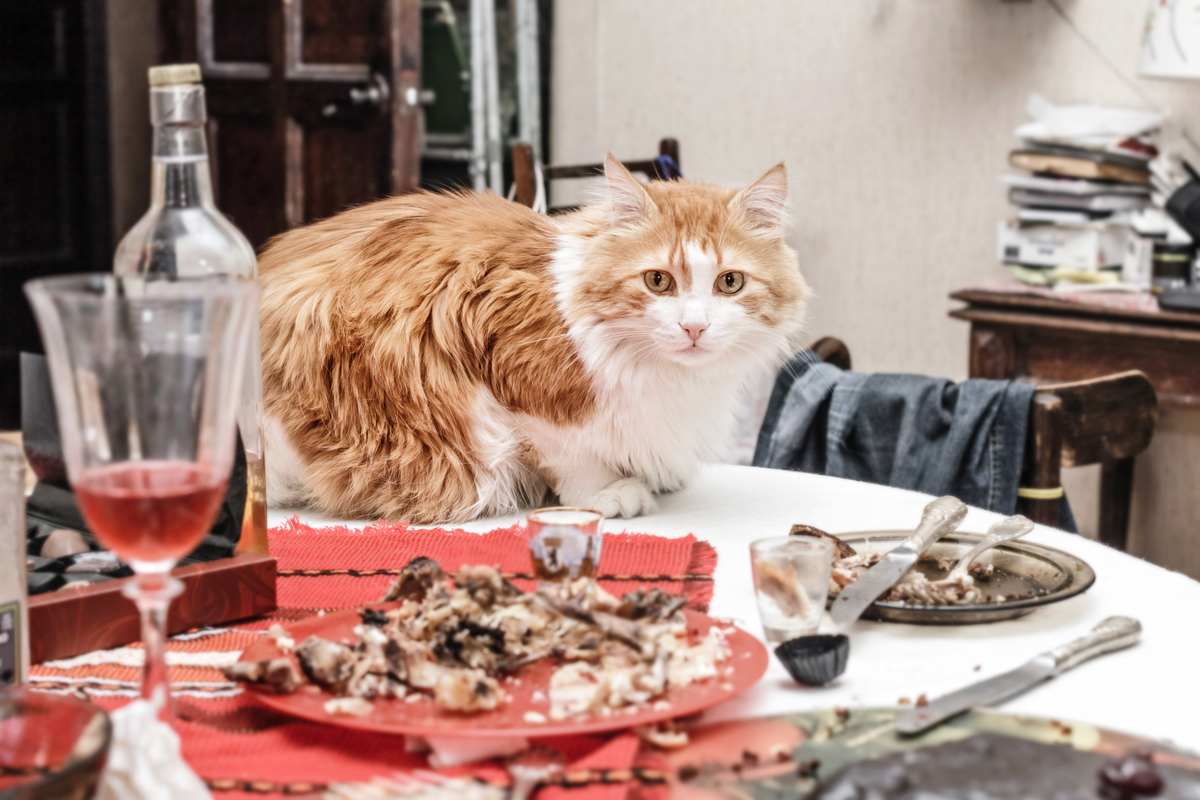 A cute red cat sitting on the dining table with unfinished food on the plates
