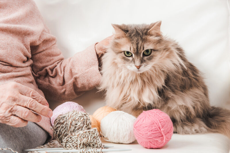 An elderly cat being pet by her owner with balls of yarn in front of her
