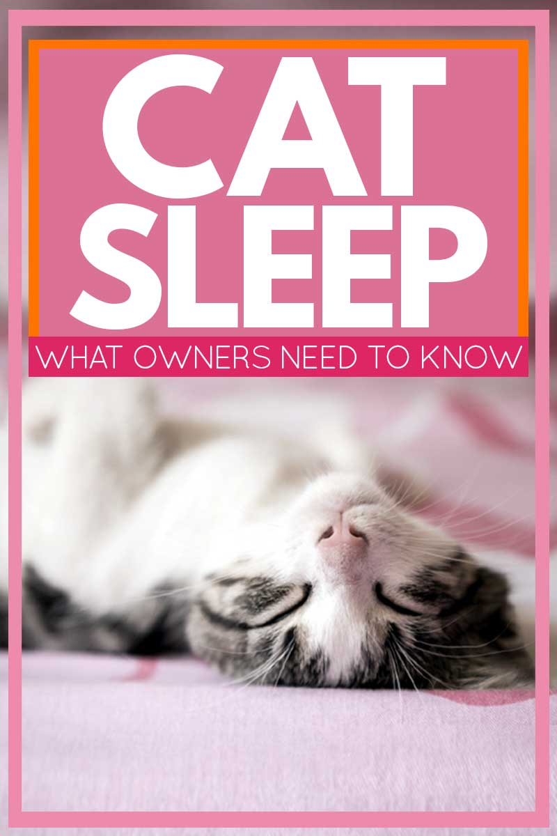 Cat Sleep: What Owners Need to Know